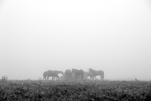 100412-FoggyAM-085-Edit