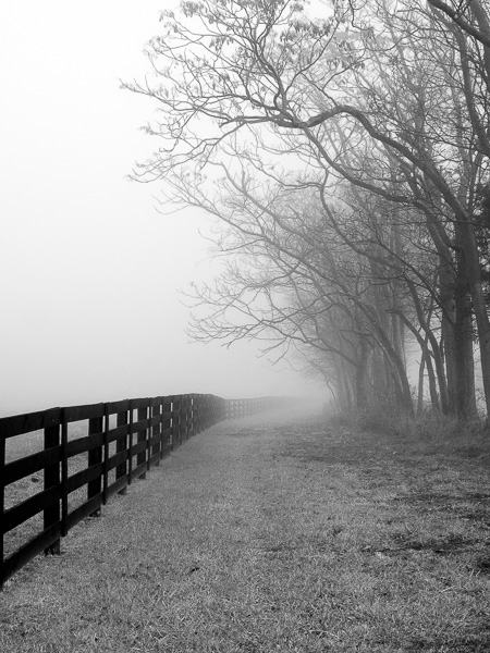 """Fence, Tree & Fog"""