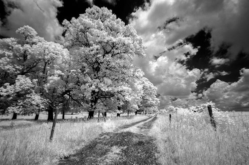 Farm track captured in infrared.