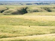"""""""South Dakota Prairie"""""""