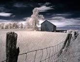 """Barn and Tree"" (Digital Infrared)"