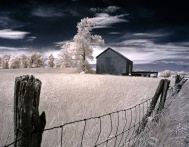 """Barn and Tree"" (Digital Infrared)"