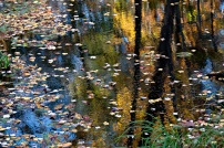 """Autumn Reflections #3)"